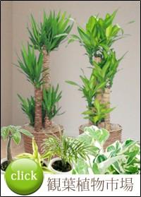 観葉植物市場