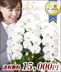 大輪胡蝶蘭3本立 白 15,000円