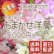 おまかせ洋蘭3,000円〜