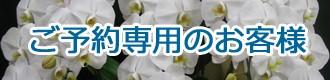胡蝶蘭ご予約対象商品