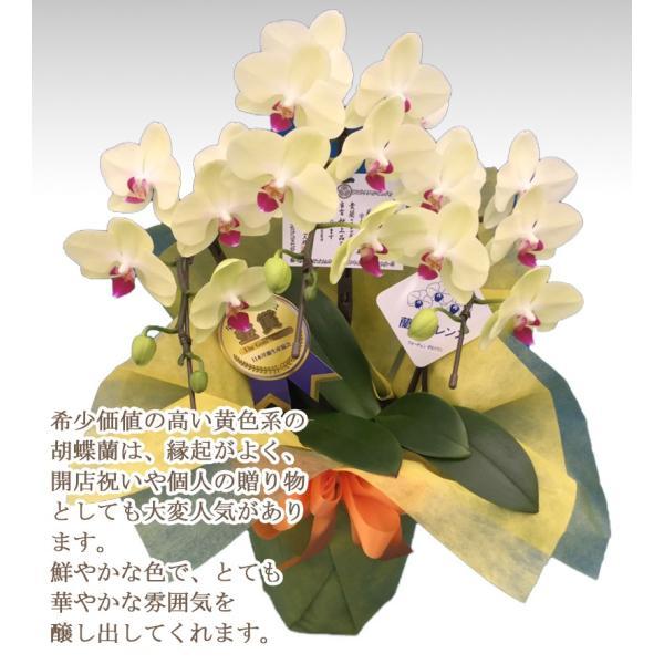 胡蝶蘭ランキング1位 3本立ち 明日贈れる 贈答用 お祝い ギフト お供え|kihana-shop|17