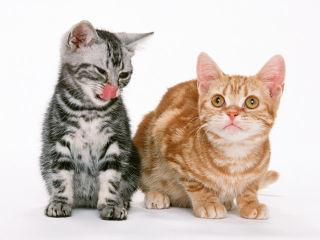 ※犬や猫などのペット、ハムスターなど小動物のいるおしっこ・そそう・糞の悪臭消臭に