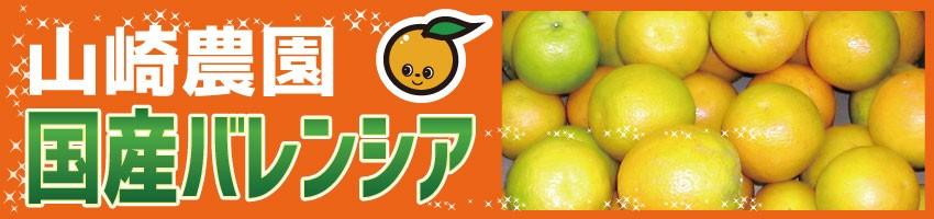 山崎農園 国産バレンシアオレンジ