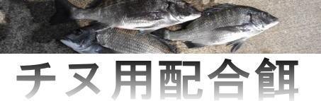 チヌ釣りの定番