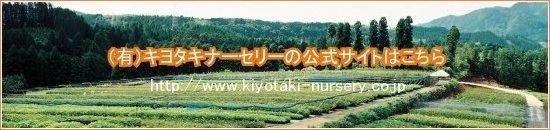 キヨタキナーセリー公式サイト