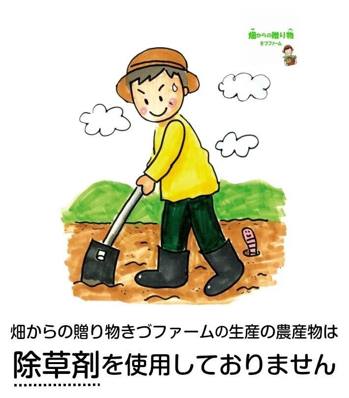kizufajyosouzaipo.jpg