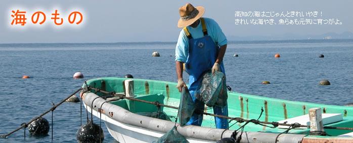 【海のもの】高知の海はこじゃんときれいやき!きれいな海やき、魚らぁも元気に育つがよ。