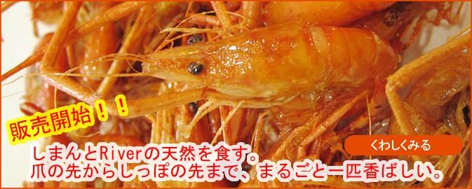 高知県/四万十産 天然手長えび