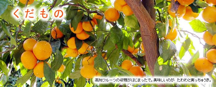 【くだもの】高知のフルーツの収穫がはじまったで。美味しいのが、たわわと実っちゅうき。