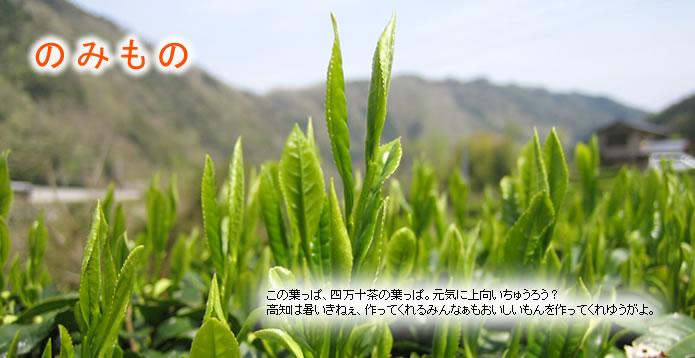 【のみもの】この葉っぱ、四万十茶の葉っぱ。元気に上向いちゅうろう?高知は暑いきねぇ、作ってくれるみんなぁもおいしいもんを作ってくれゆうがよ。