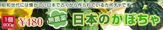 日本カボチャ800g