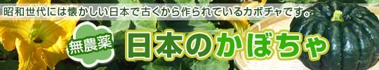 日本カボチャ