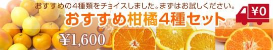 おすすめ柑橘4種セット送料無料