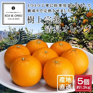 樹上完熟清見オレンジ
