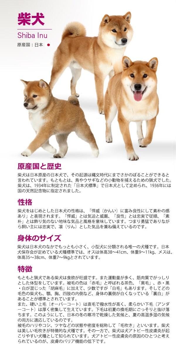 ロイヤルカナン 柴犬