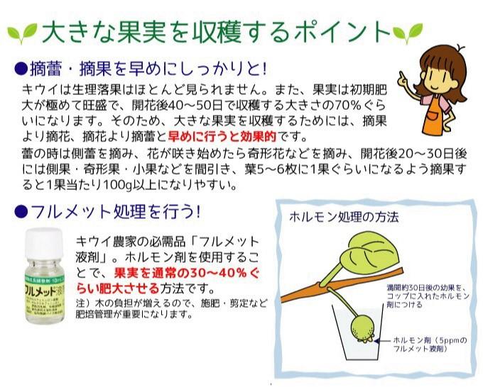大玉キウイの作り方