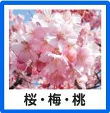 桜・花梅・花桃