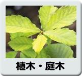 庭木・植木