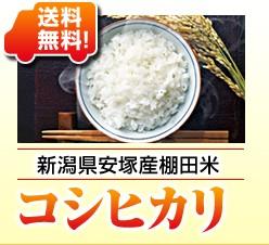 新潟県安塚産棚田米コシヒカリ
