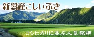 特別栽培米新潟産こしいぶき