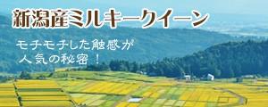 特別栽培米新潟産ミルキークイーン