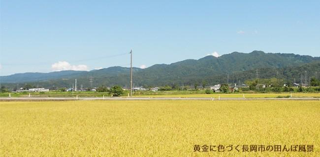 長岡市の田んぼ風景