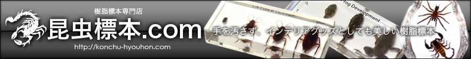 昆虫標本.com