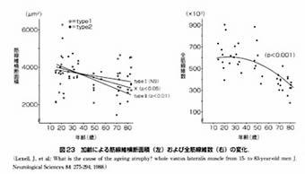 加齢による筋腺維横断面積(左)及び全筋腺維数(右)の変化を示すグラフ