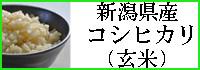 コシヒカリ(玄米)