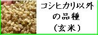 コシヒカリ以外の品種(玄米)