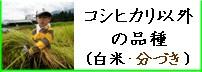 コシヒカリ以外の品種(白米・分