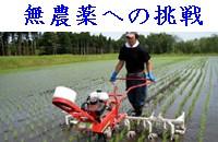 無農薬への挑戦