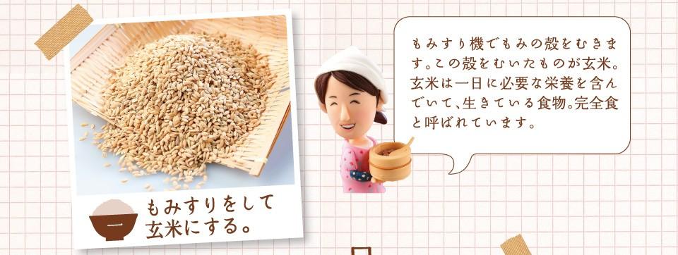 もみすりをして玄米にする。