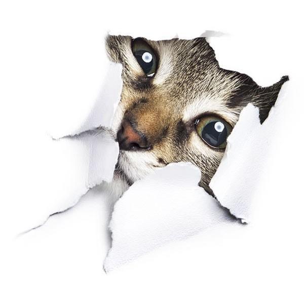 動物 カーステッカー アニマル 犬 猫 かわいい ドレスアップ 車 バイク カー用品 ステッカー|koyokoma|10