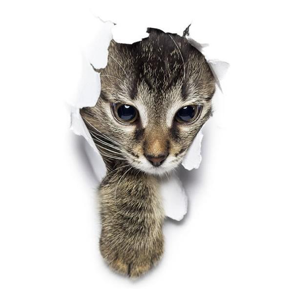 動物 カーステッカー アニマル 犬 猫 かわいい ドレスアップ 車 バイク カー用品 ステッカー|koyokoma|09