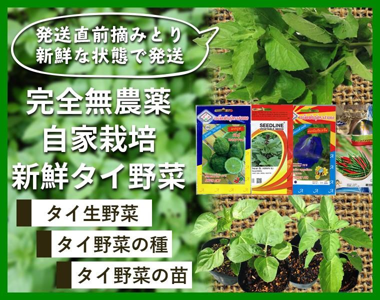 ガパオ・タイ野菜の苗一覧