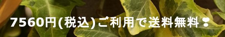 7560円以上ご利用で送料無料!!