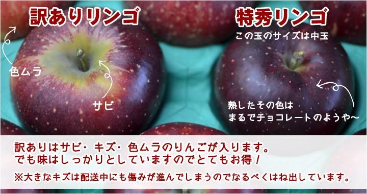 秋映 中生りんご