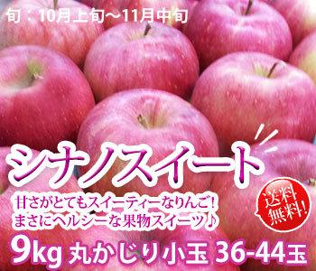 シナノスイート リンゴ 丸かじり 訳あり