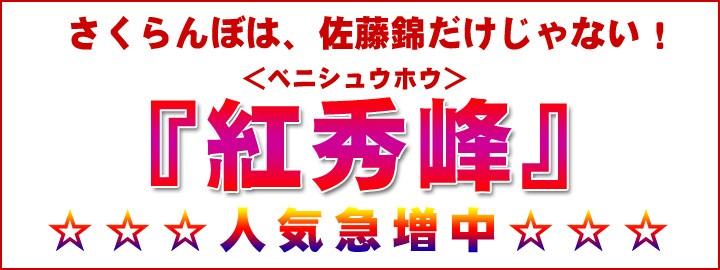 さくらんぼ 紅秀峰 人気上昇中!
