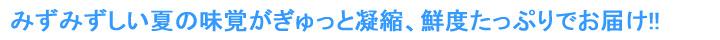 川中島白桃 美味しい美味しい白桃!