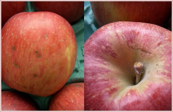 りんごの定番!!