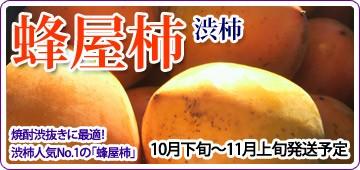 蜂屋柿 渋柿