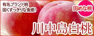 川中島白桃 桃