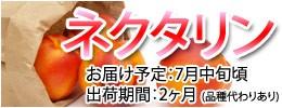 ネクタリン 本場・長野県