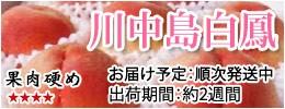 川中島白鳳 硬い桃