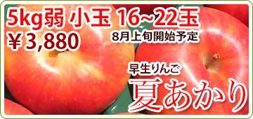 夏あかり リンゴ 早生りんご
