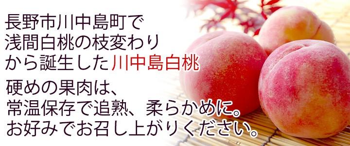 美味しい美味しい白桃をお届けします!!