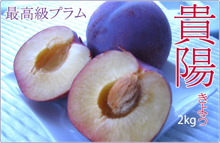 新品種、最高級プラム 貴陽です!! 大玉です。