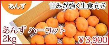 ハーコット あんず 長野県県産